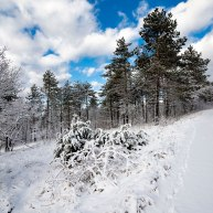 Neve-Auremiano11-copia