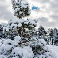 Neve-Auremiano15-copia