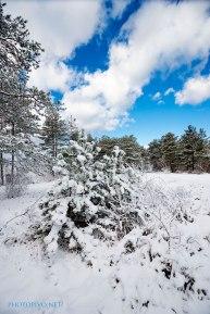 Neve-Auremiano17-copia