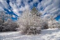 Neve-Auremiano20-copia