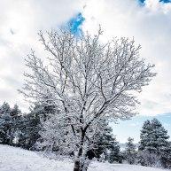 Neve-Auremiano24-copia