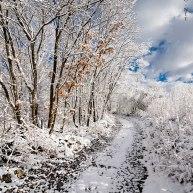 Neve-Auremiano3-copia