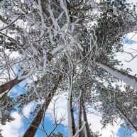 Neve-Auremiano6-copia