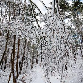 Neve-Auremiano7-copia