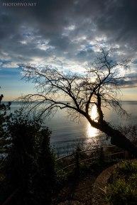 L'albero de Canovelle