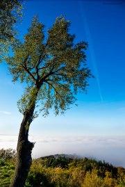 L'albero della nebbia