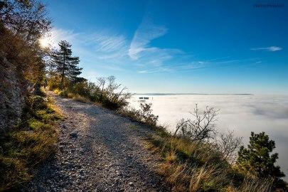 Nebbia a Cattinara